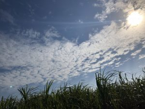 宮古島ワイドーマラソン 海岸沿い1